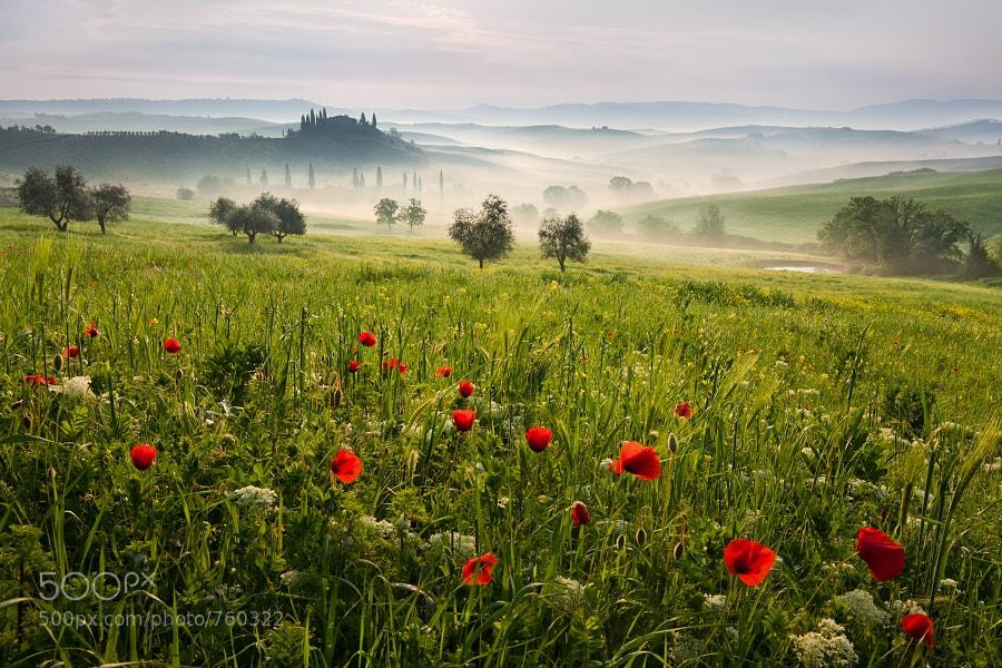 Tuscan spring 1 by Daniel ?e?icha (Rericha)) on 500px.com