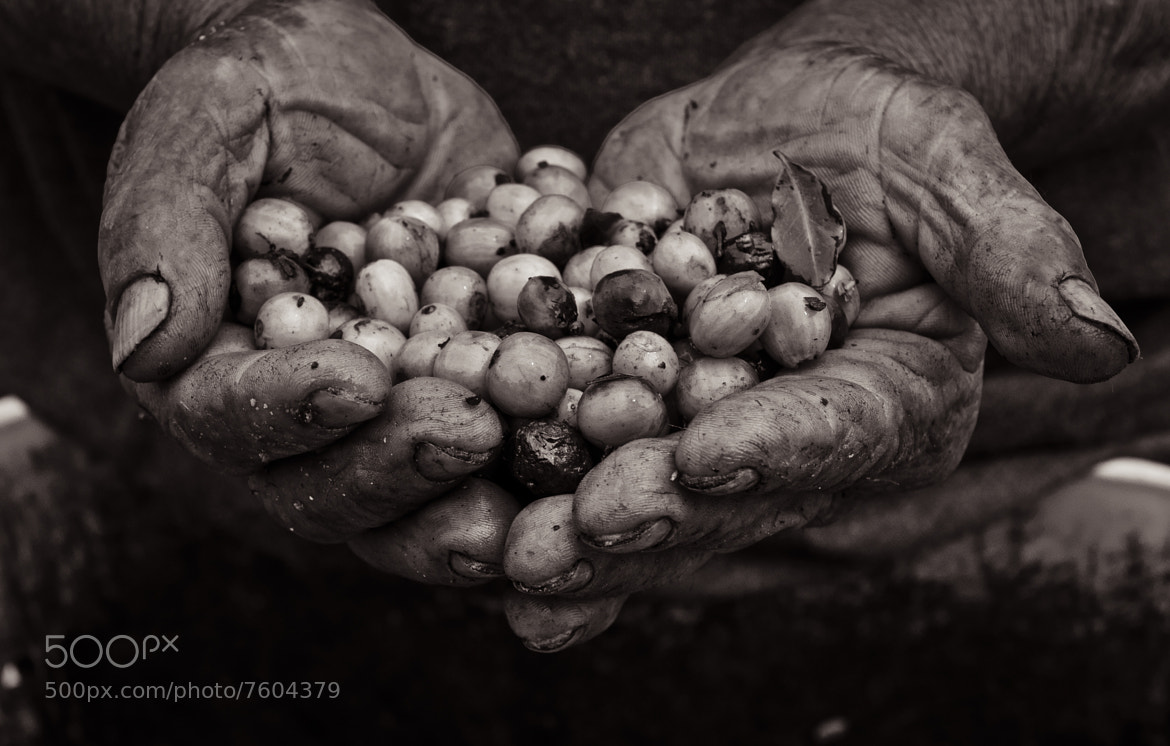 Photograph hands of a campesino by michael thompson on 500px