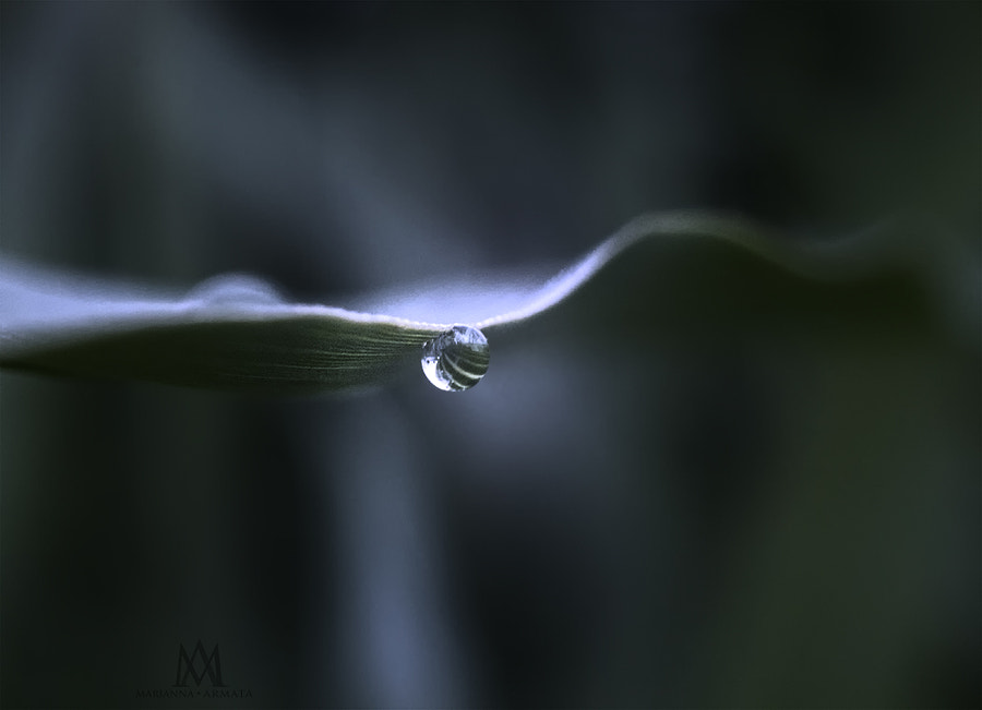 droplet on a blade of grass