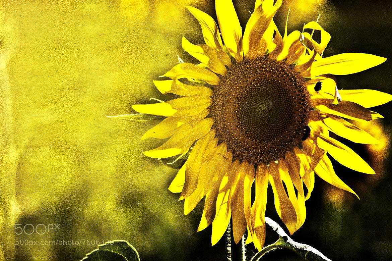 Photograph Sun is life by Giacomo Signorino on 500px