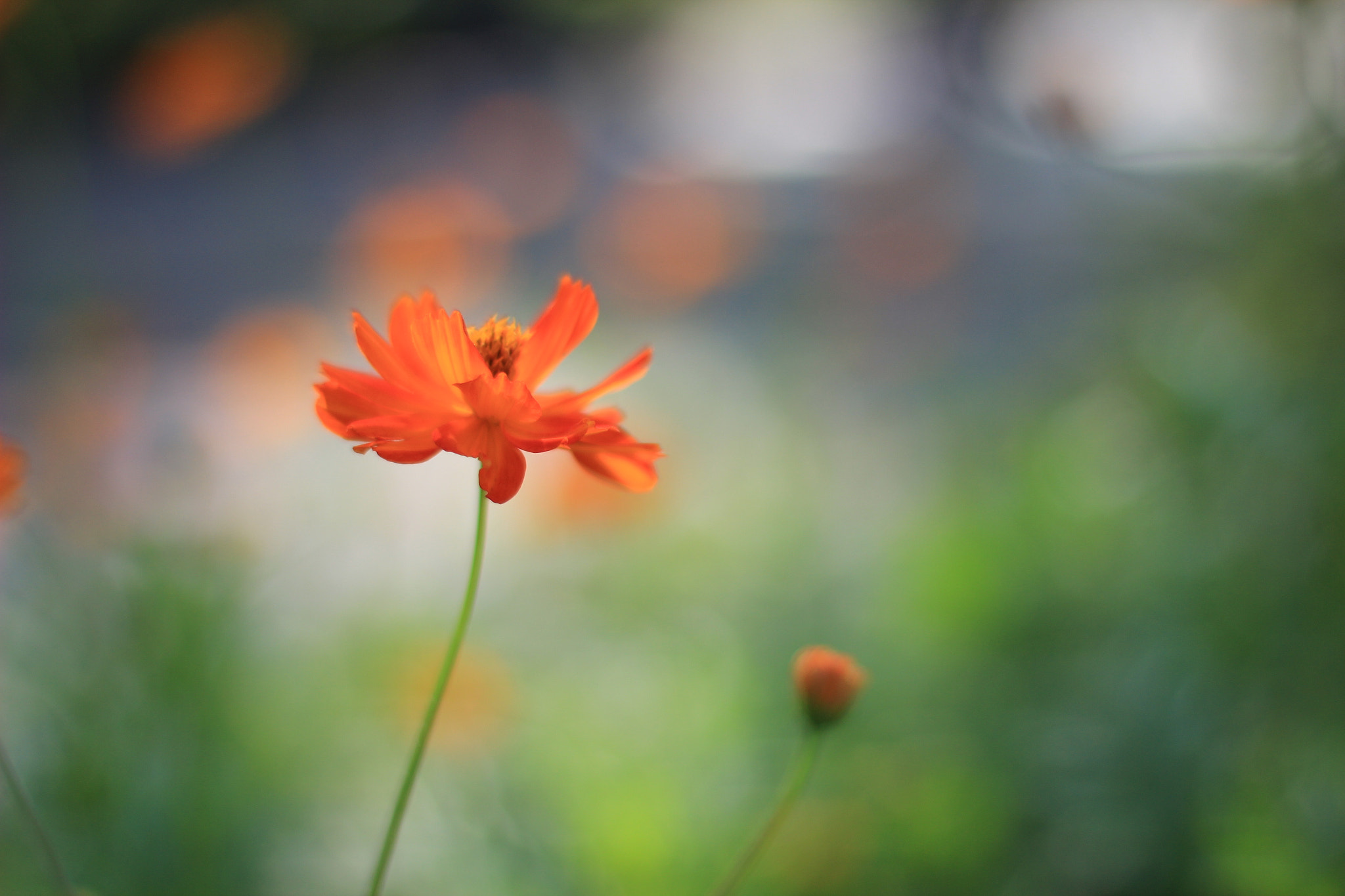 Photograph orange by Andres  Torres on 500px