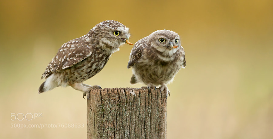 Photograph a worm a day... by Mark Bridger on 500px