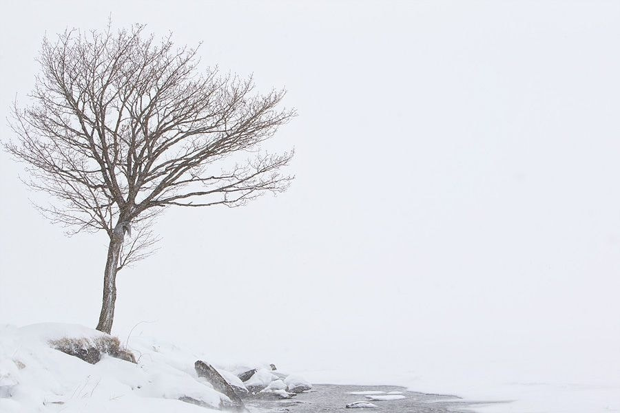 Photograph Tree in snow by Peter Edge on 500px