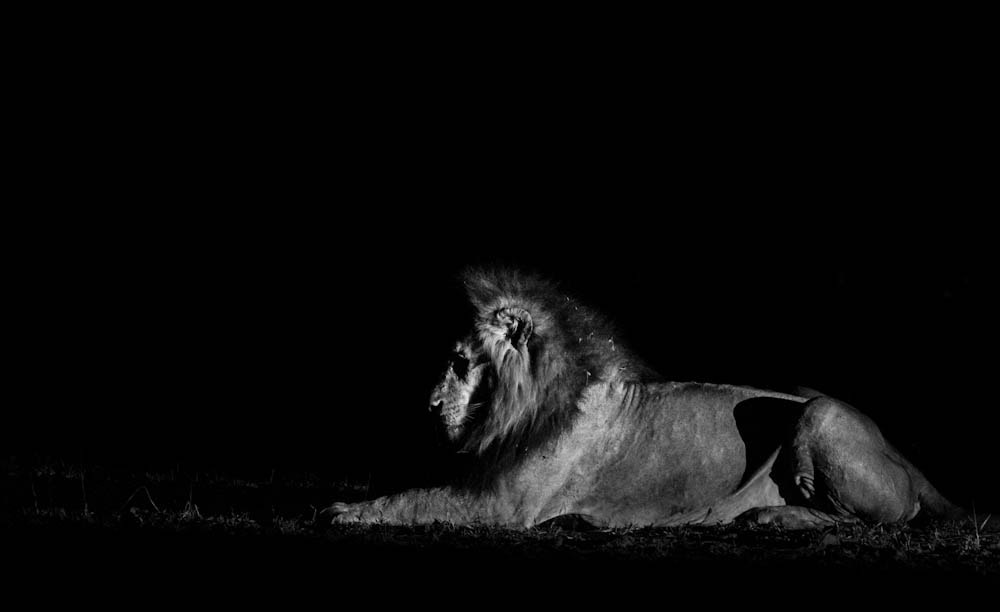 Photograph Ghost and the Darkness by Marlon du Toit on 500px