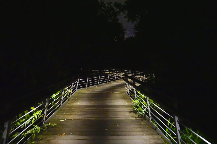 A Lighted Path in Darkness
