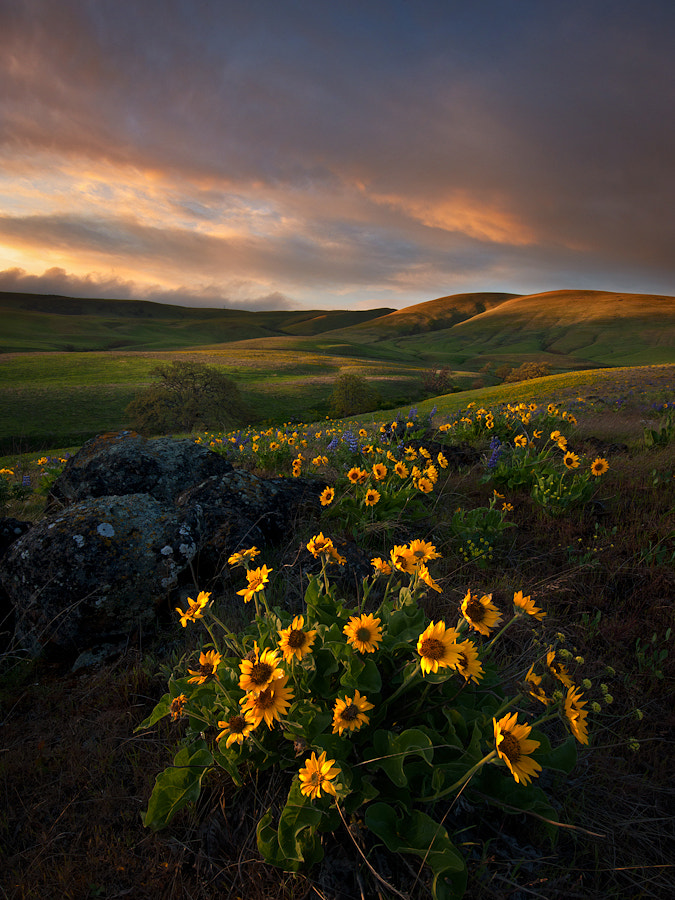 Photograph Dalles Mountain Majesty by Alex Mody on 500px
