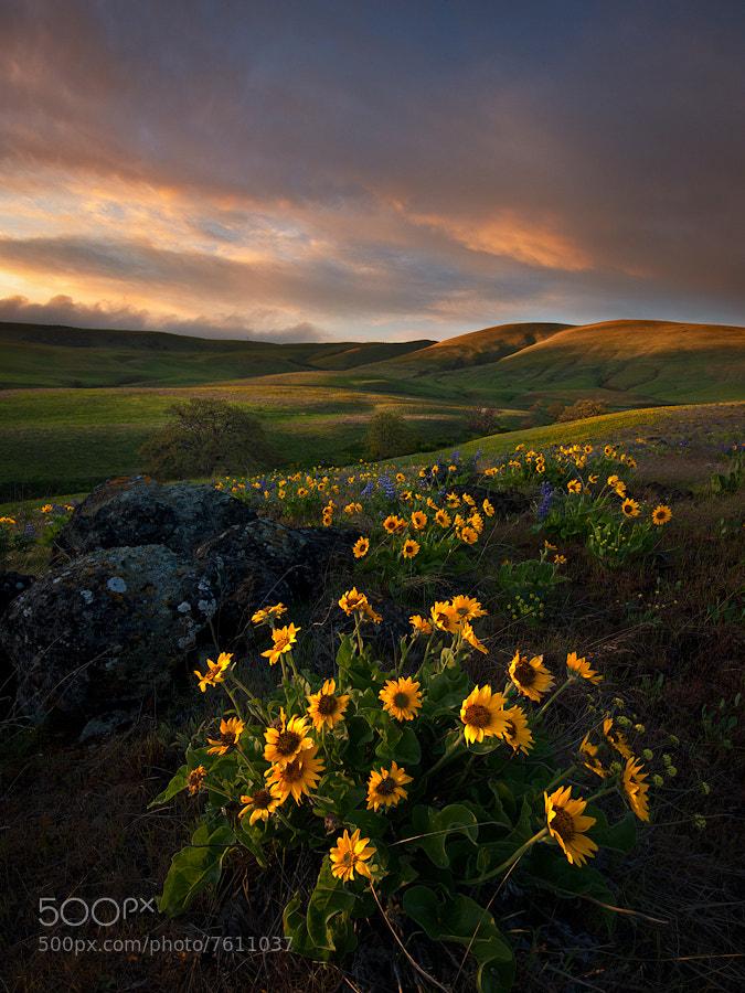 Photograph Dalles Mountain Majesty by Alex Mody on 500px