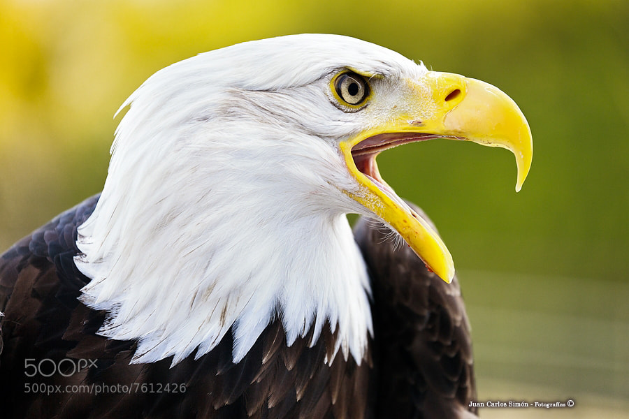 Photograph Fuerza y poder (Strength and power) by Juan Carlos Simón on 500px