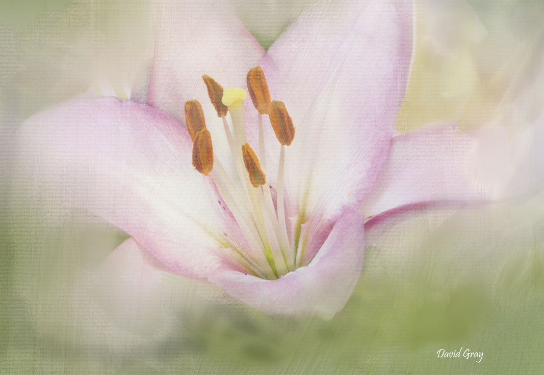 Photograph Soft Touch by David Gray on 500px