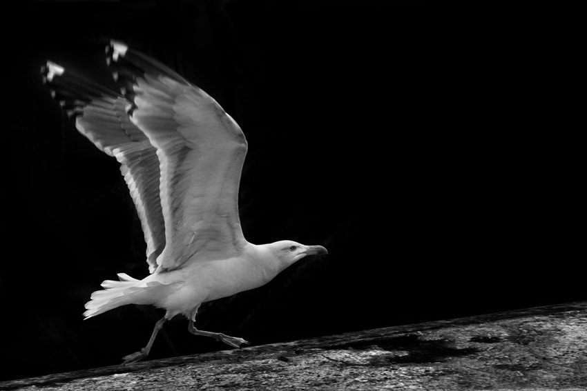 Photograph Take Off by mario pignotti on 500px