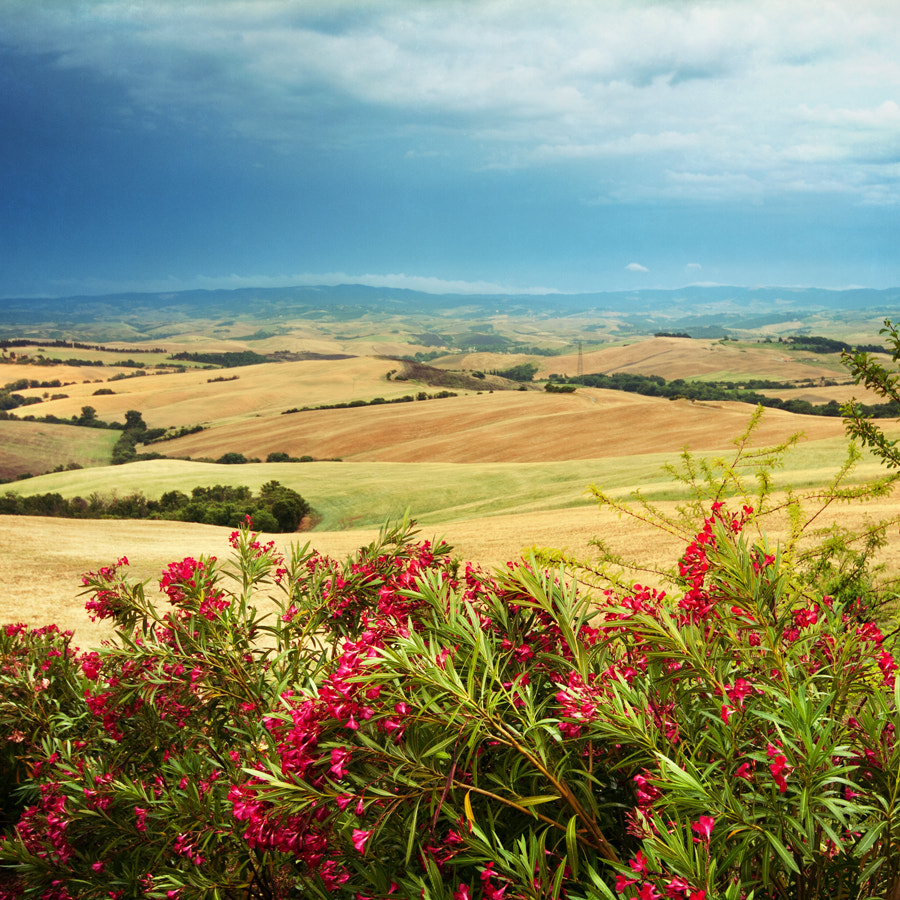Photograph Landscape with oleander by Gabi Lukacs on 500px
