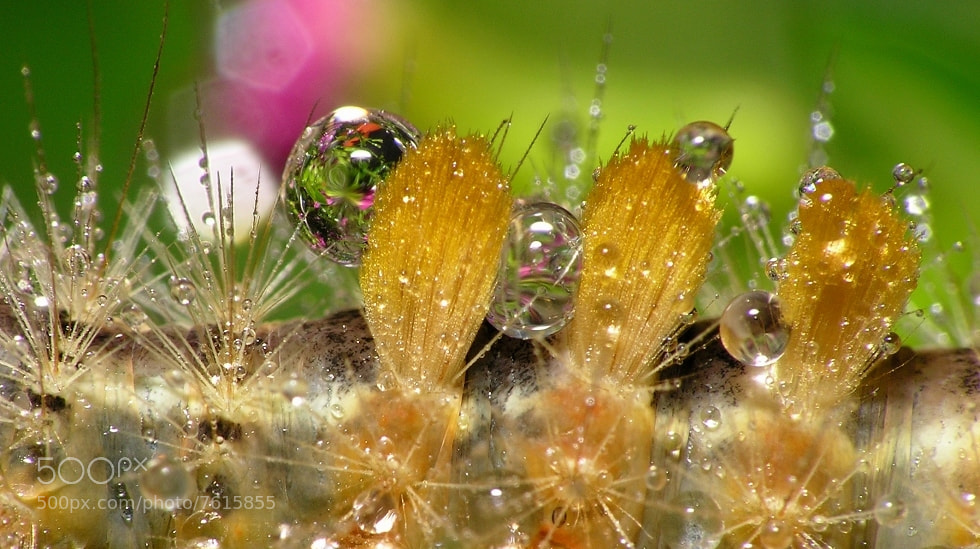 Photograph bug_water by Tong Huang on 500px