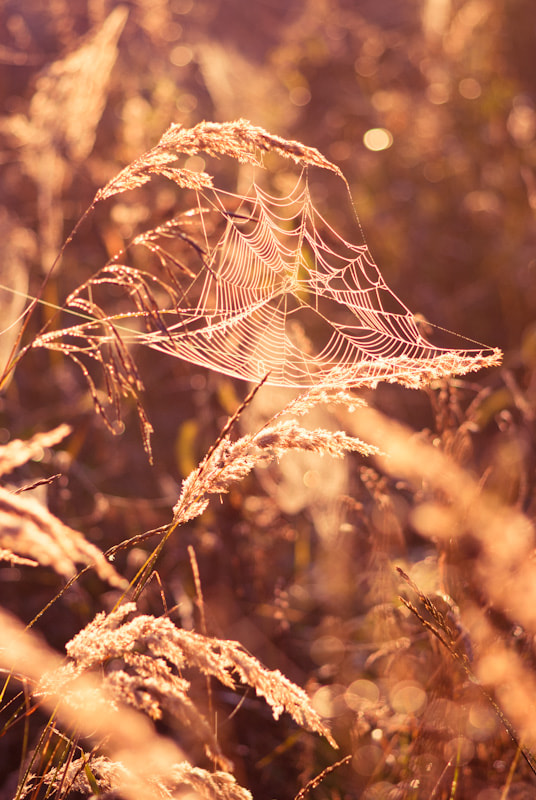 Photograph Web in gold grass by Art V. on 500px