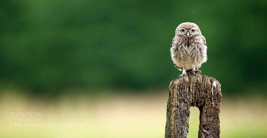 Photograph feed me! by Mark Bridger on 500px