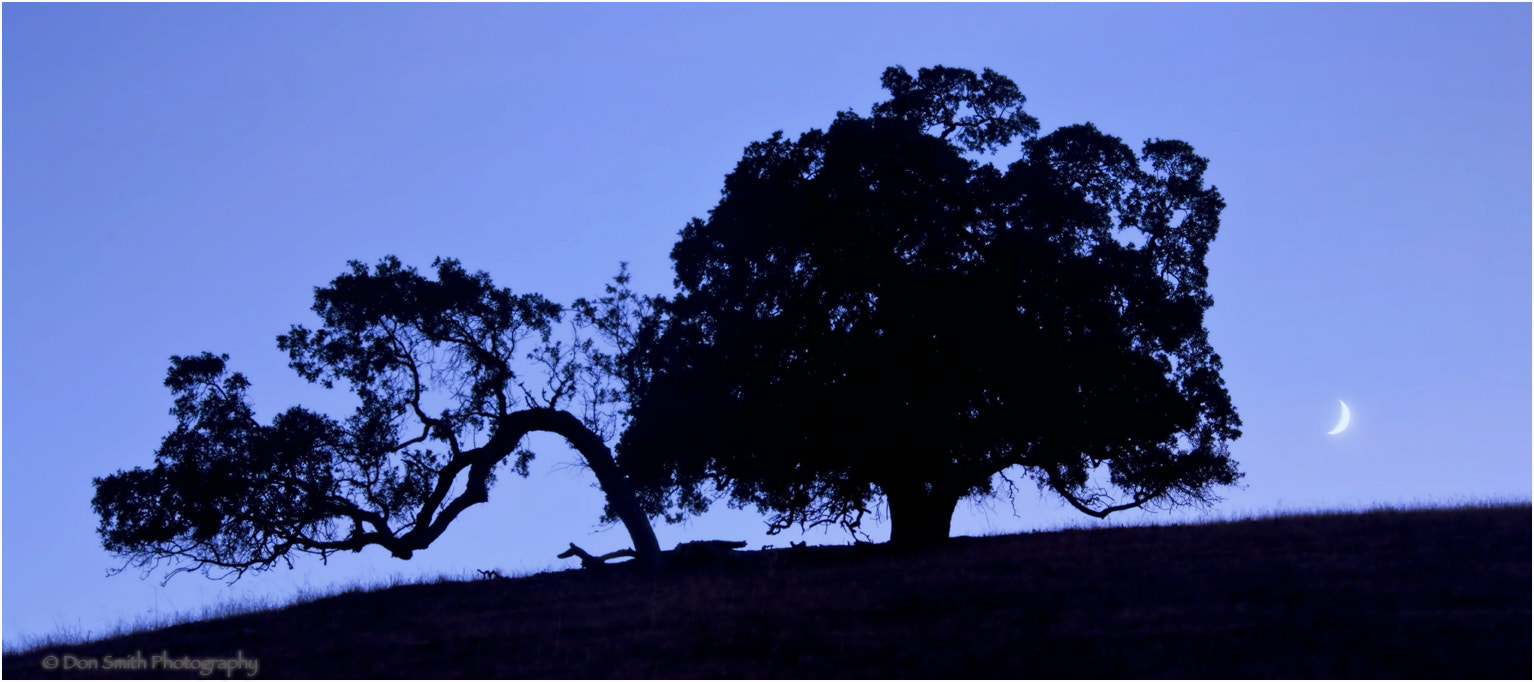 Photograph California Oak and Crescent Moon by Don Smith on 500px