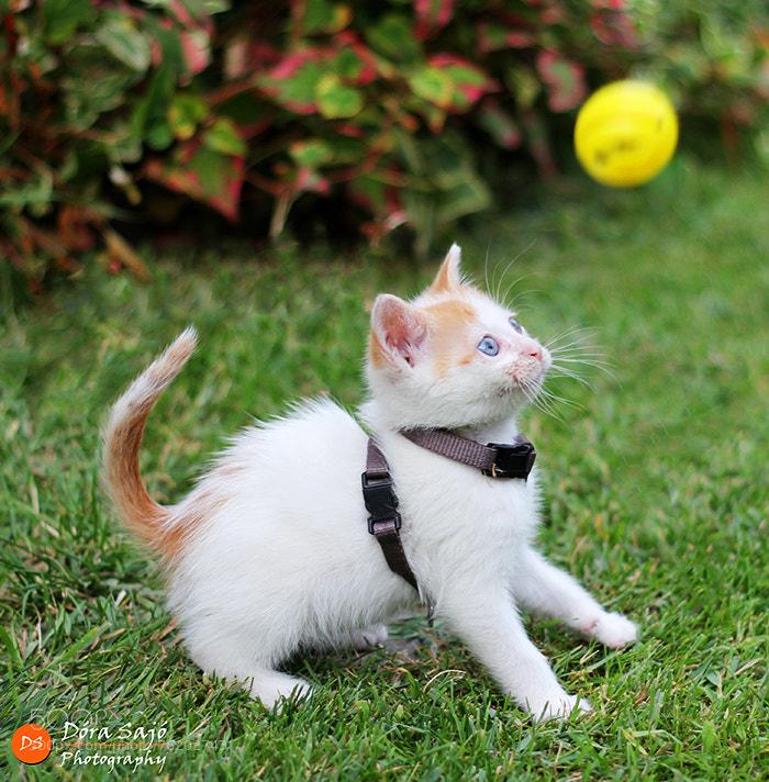 Photograph Playful kitten by Dora  on 500px