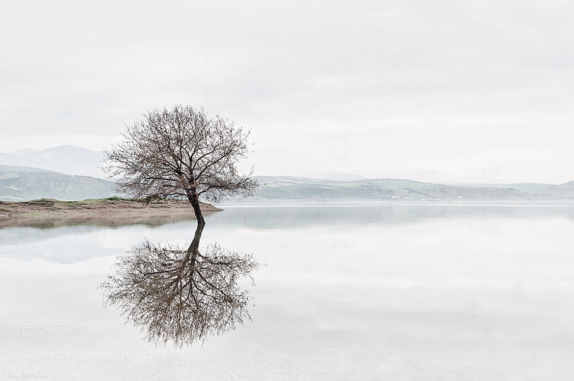 Photograph Tree reflection by Nikos Koutoulas on 500px