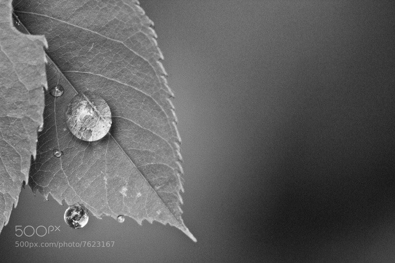 Photograph sticky raindrop by Jasper van den Heuvel on 500px