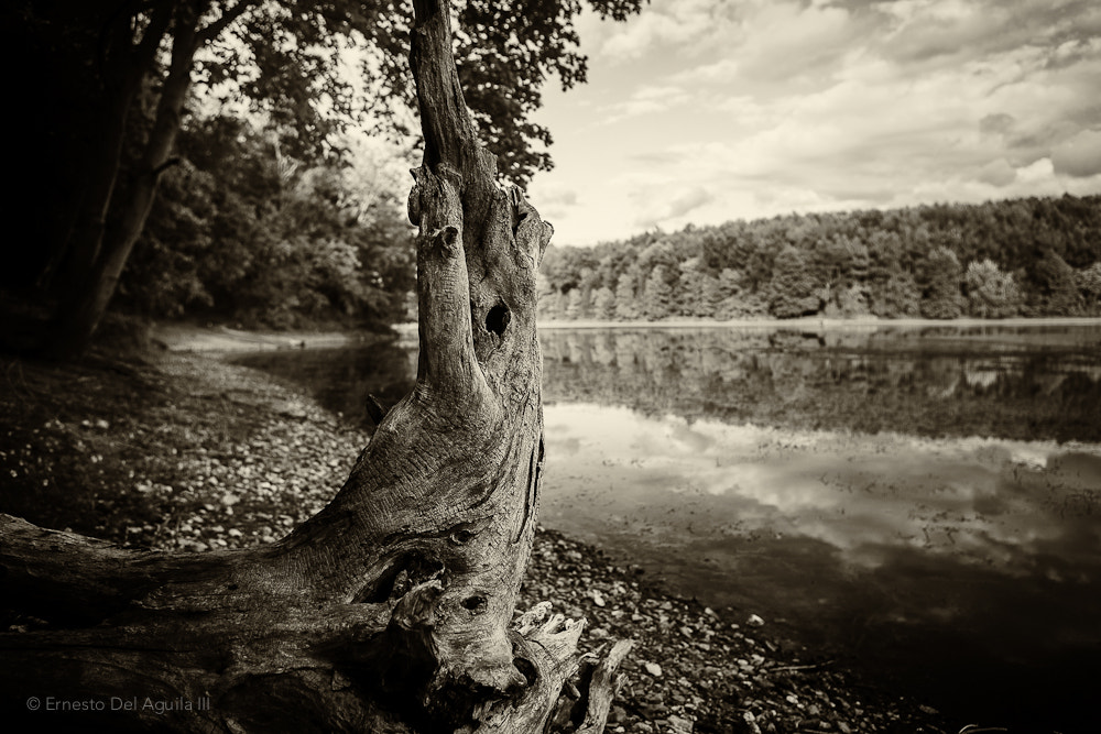 Photograph Deadwood by Ernesto Del Aguila III on 500px
