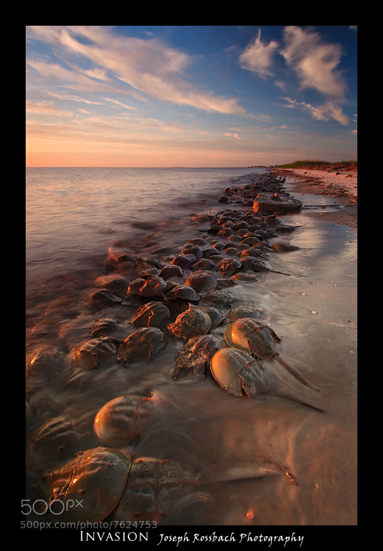 Photograph Invasion by Joseph Rossbach on 500px