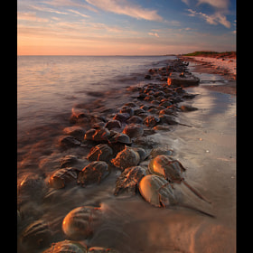 Invasion by Joseph Rossbach (josephrossbach)) on 500px.com