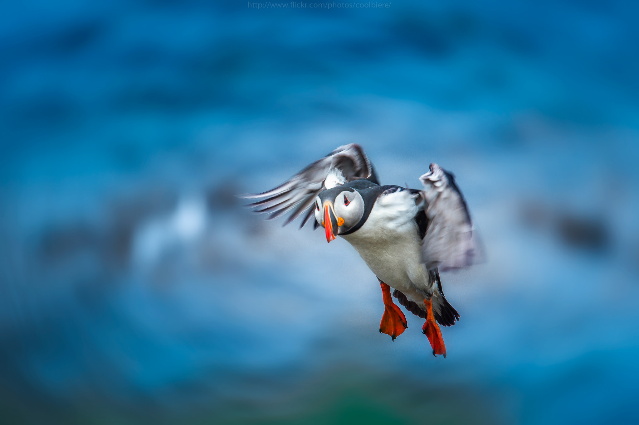 Photograph Fly baby Fly by Coolbiere. A. on 500px