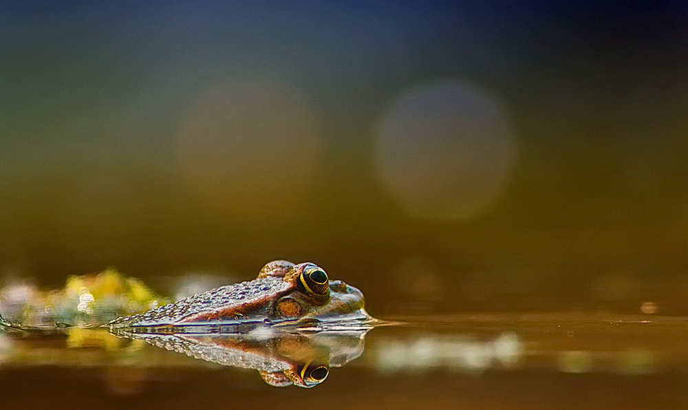 Photograph look in the light by Miklos Liziczai on 500px