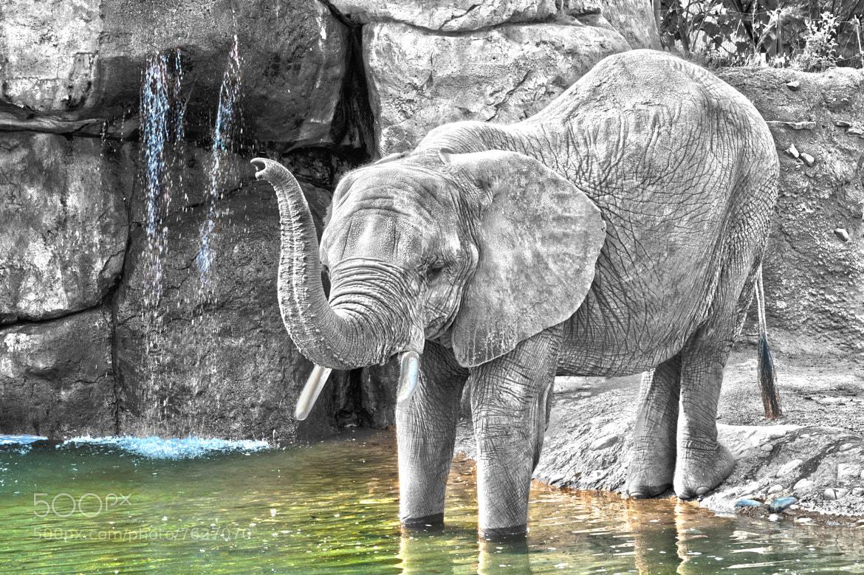 Photograph Elephant Foot Bath by Aaron Clark on 500px
