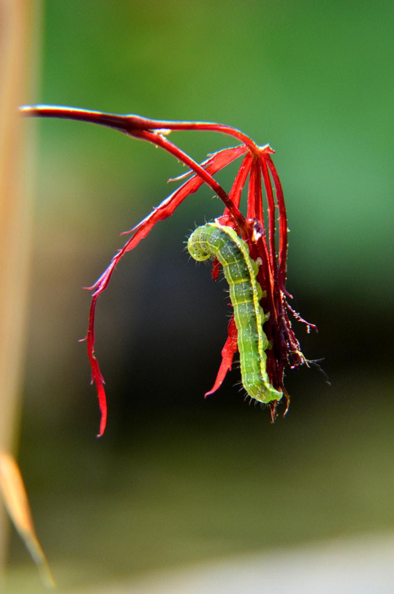 Photograph Caterpillar by Jan P. on 500px