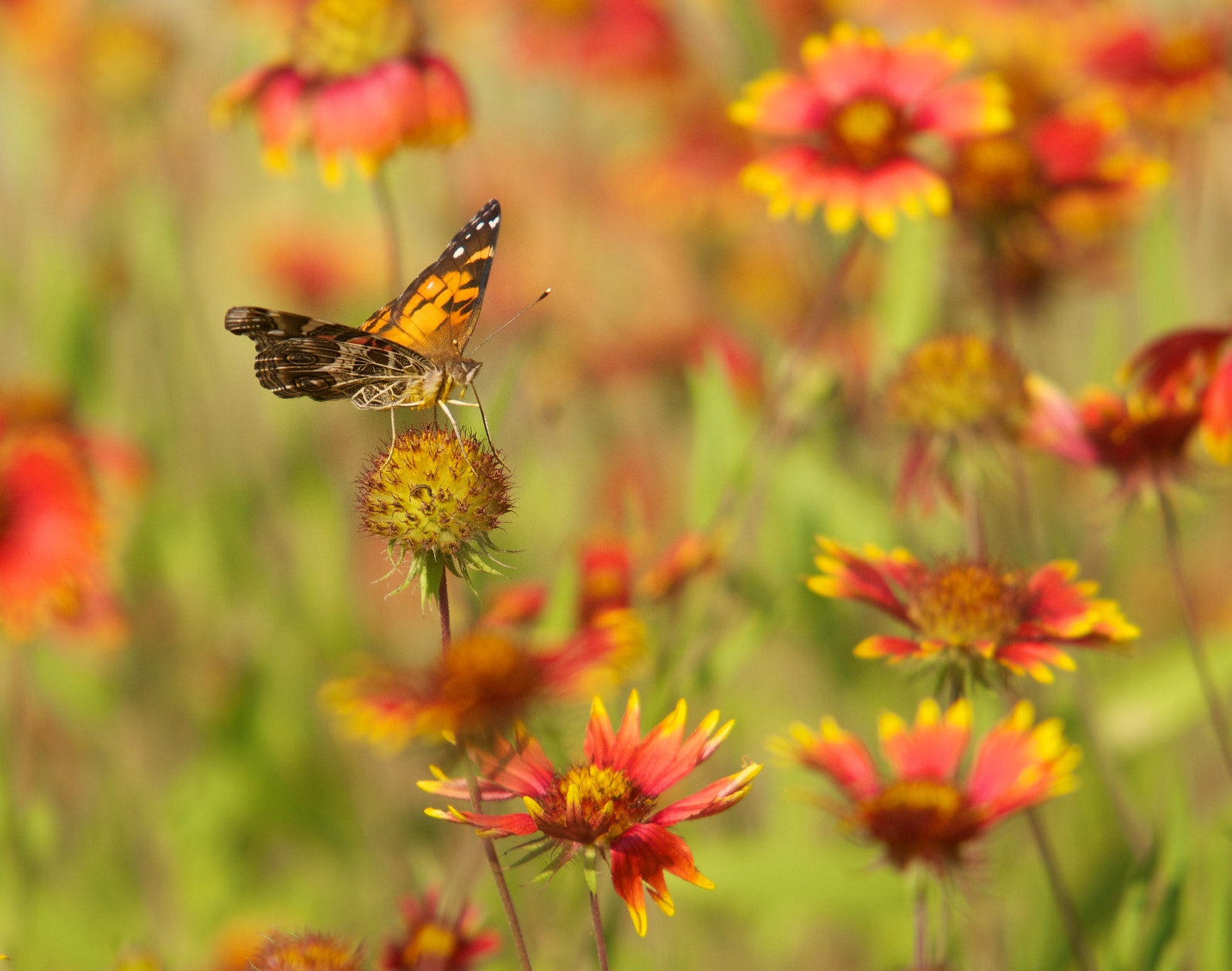 Photograph Garden of Color by Mike Fuhr on 500px