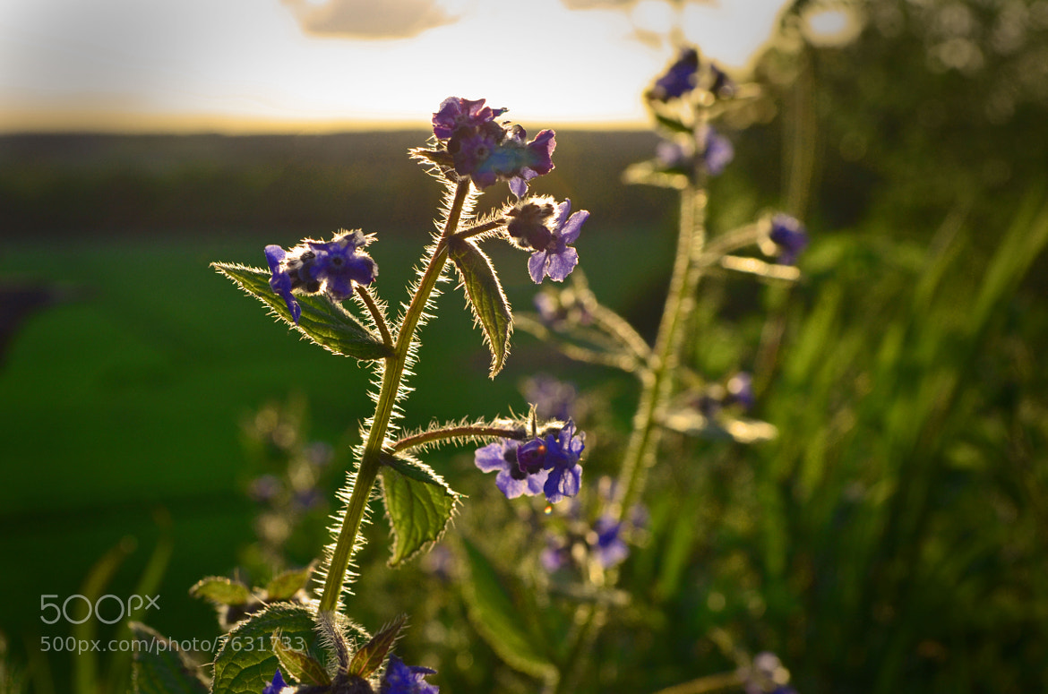Photograph Hedgerow Flowers by Youngman Images on 500px