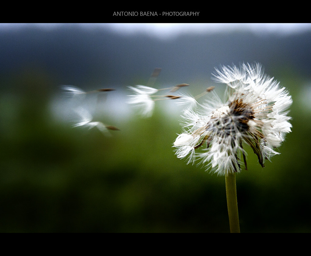 Photograph The Wind by Antonio Baena on 500px