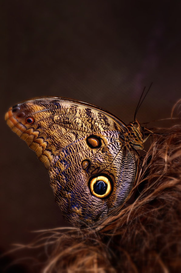 Photograph Butterfly by Veronica  Andre on 500px