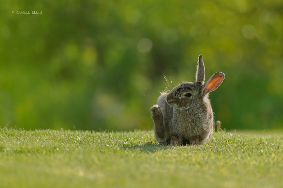 Bunny with an itch