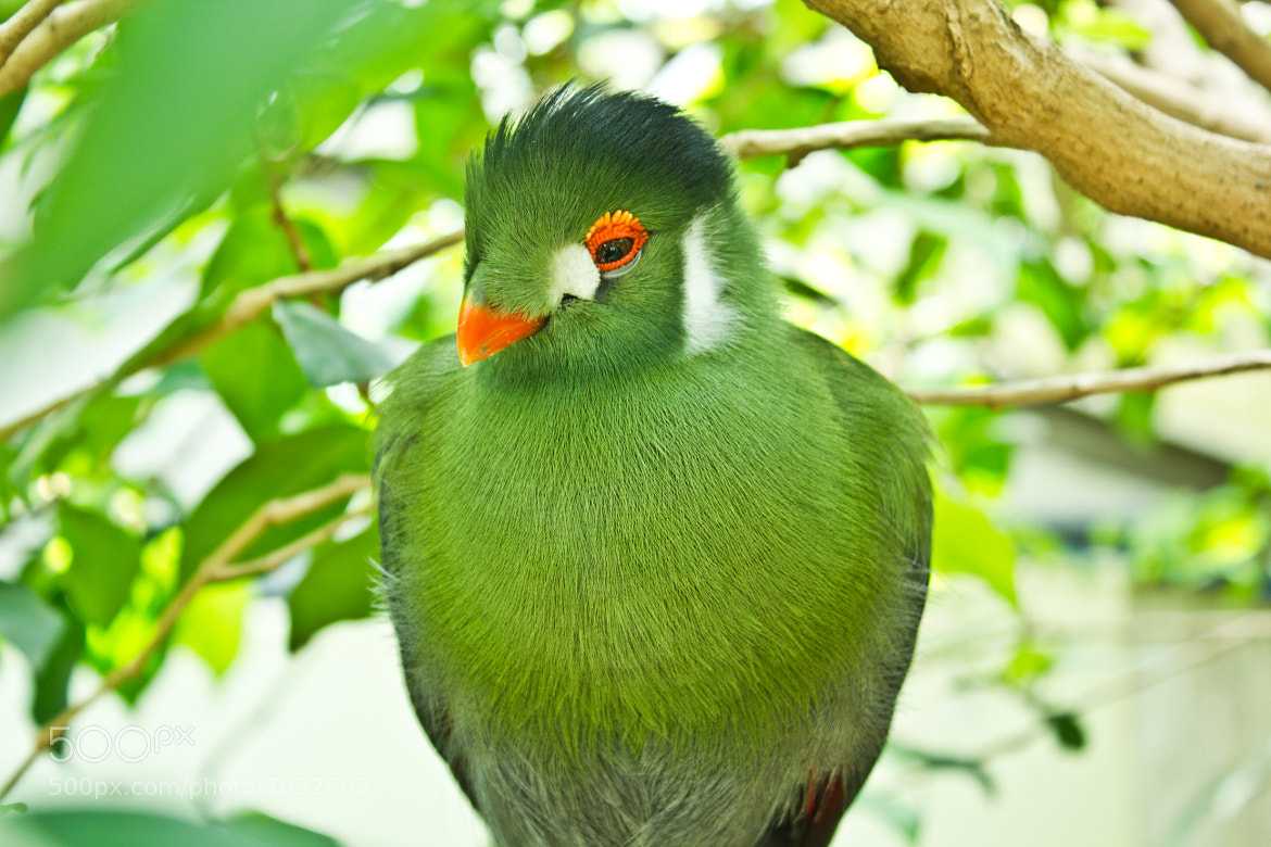 Photograph Green friend by Laurent Trucchi on 500px