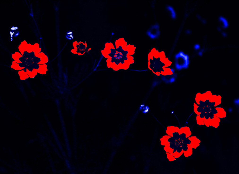 Photograph Flowers #1 by Jay Mee on 500px