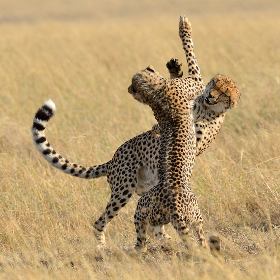 Photograph High Five by Elmar Weiss on 500px