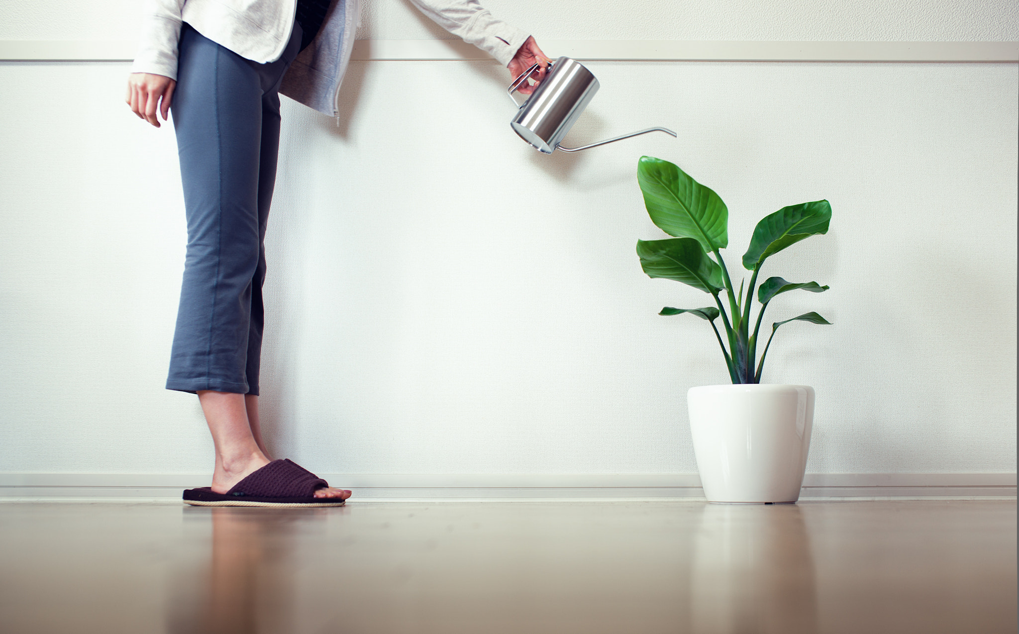 Photograph The Leading Cause of Household Plant Death is Overwatering by Ben Torode on 500px