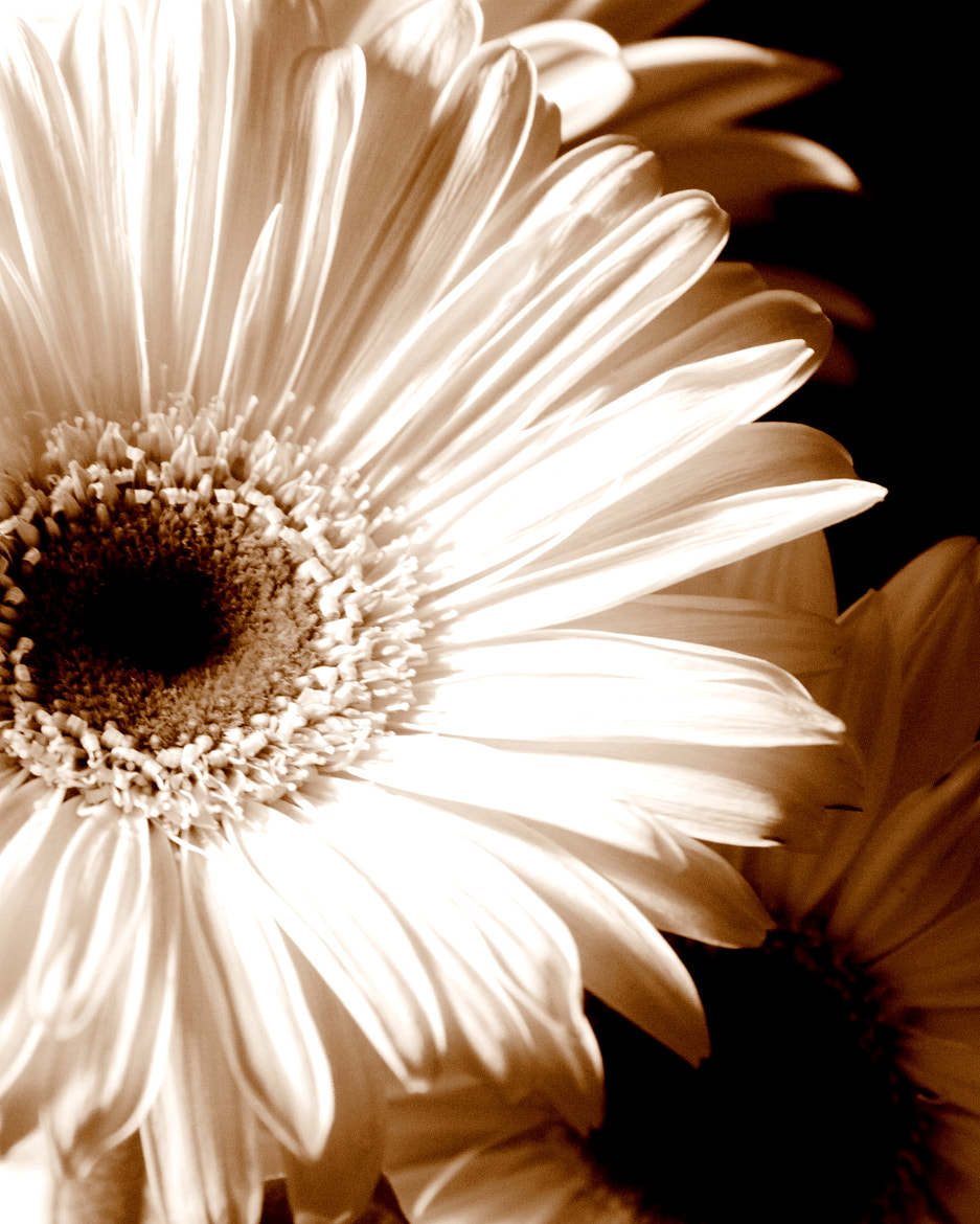 Photograph bloom 6 by Lisa Ritts on 500px