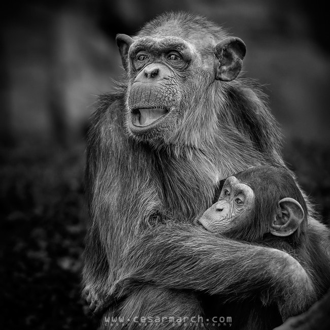 Photograph Lactancia primate by Cesar March on 500px