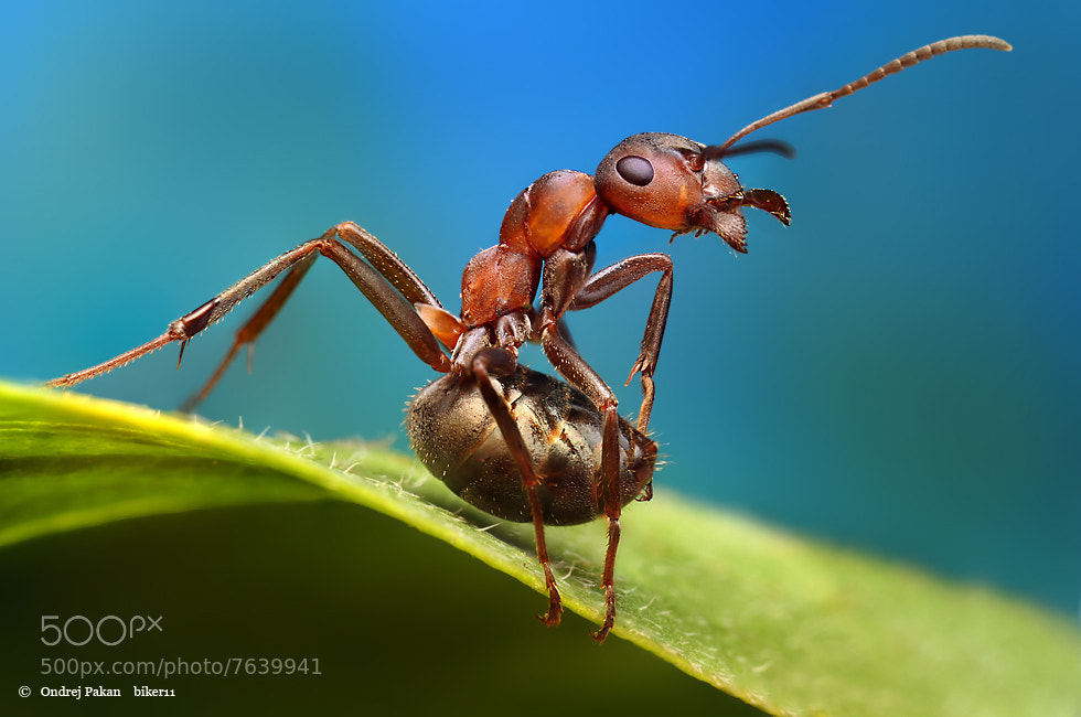 Photograph Atack by Ondrej Pakan on 500px