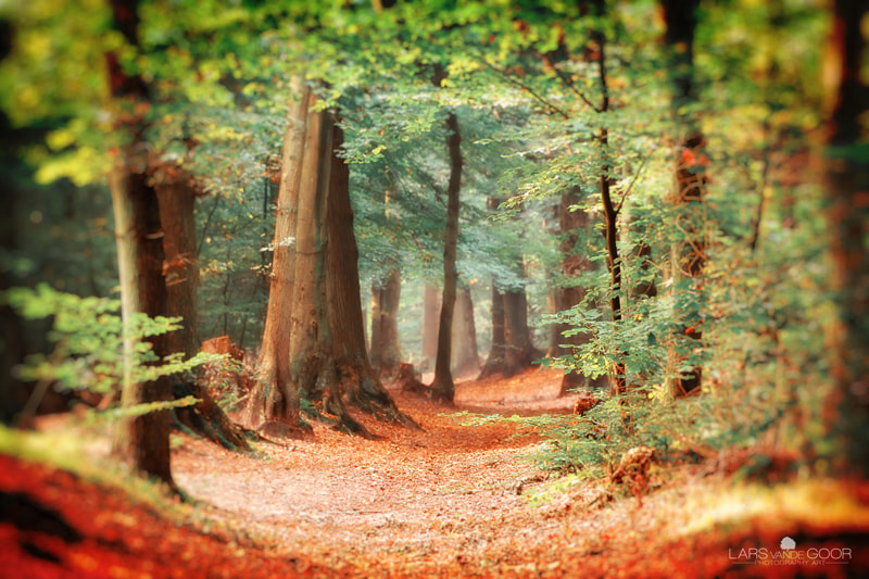 Photograph Eye of the Forest by Lars van de Goor on 500px