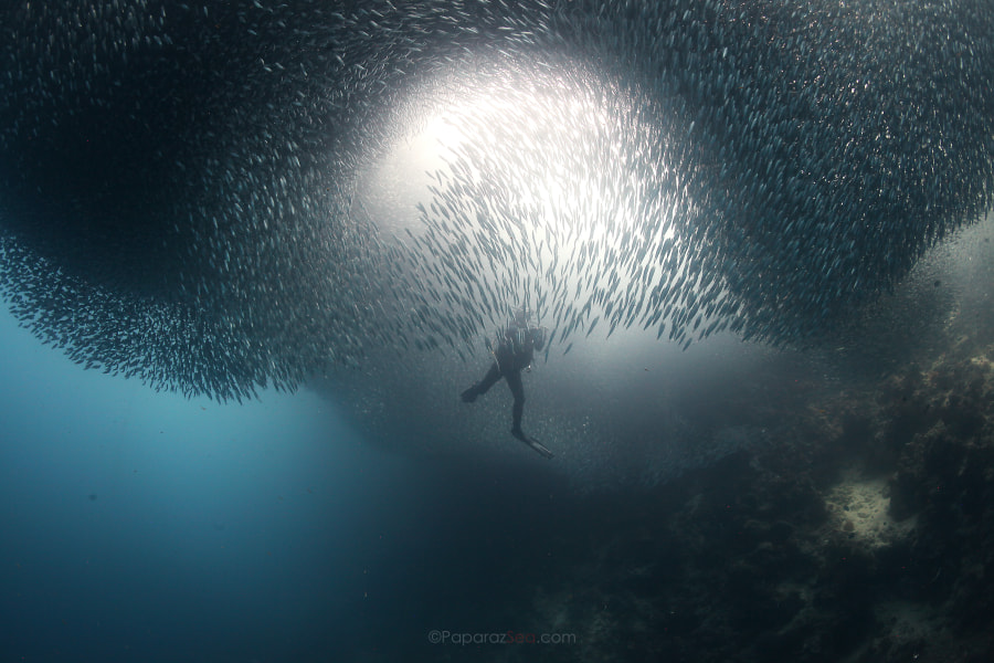The Invasion by Jun V Lao on 500px.com