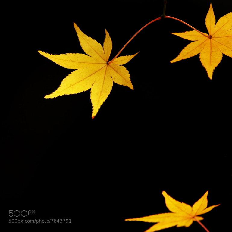 Photograph 輝 by Tashi_Delek Nakata on 500px