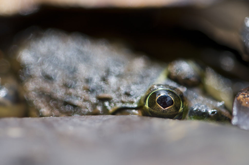 Photograph Frog in Congo by Gael Vande weghe on 500px