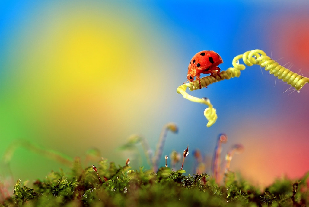 Photograph ladybugs by Harie Muchty on 500px