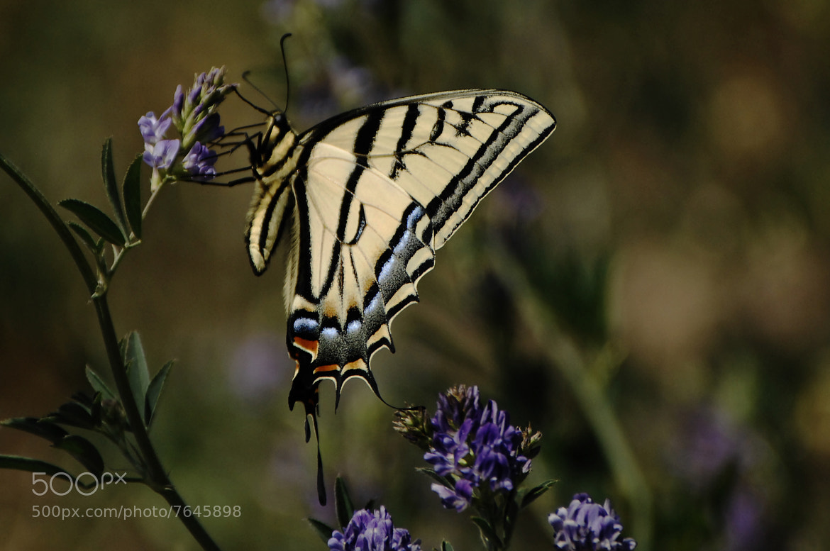 Photograph Great Butterfly by Cristobal Garciaferro Rubio on 500px
