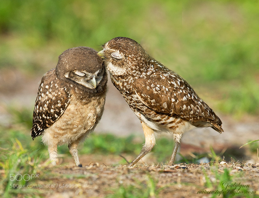 Photograph A Tender Moment by Judylynn Malloch on 500px