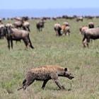 Serengeti Park, Tanzania