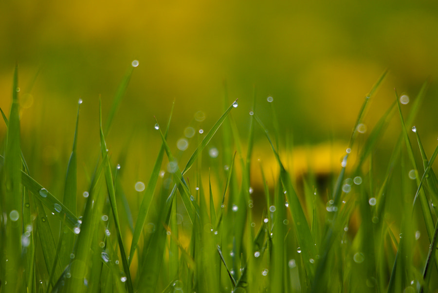 After the rain by Olafur Olufsen on 500px